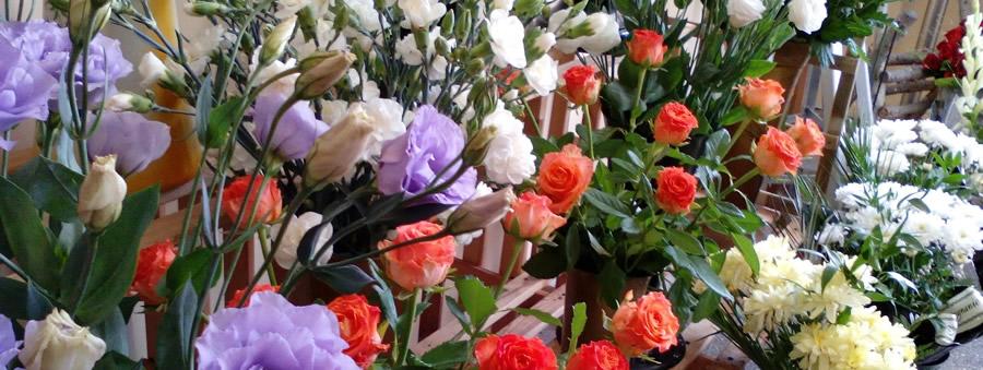 cvjećarnica Benkovac