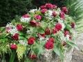roses-61203_1920